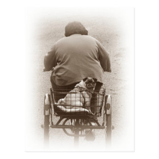 Boy And Pug Dog Going For A Ride Postcard