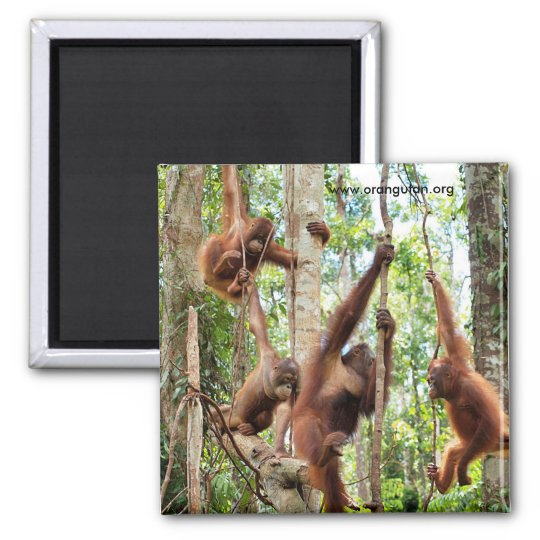 Boys in the Rainforest Hood Square Magnet
