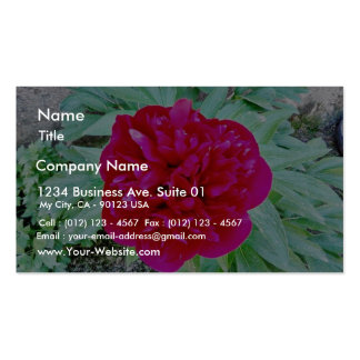 Bozur Pack Of Standard Business Cards