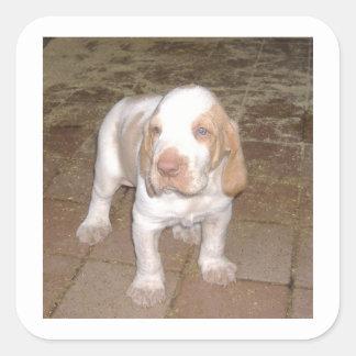 bracco-italiano puppy.png square sticker