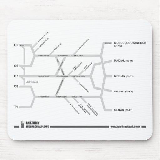 Brachial Plexus mouse mat Mouse Pads