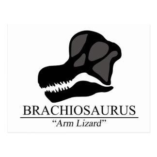 Brachiosaurus Skull Postcard