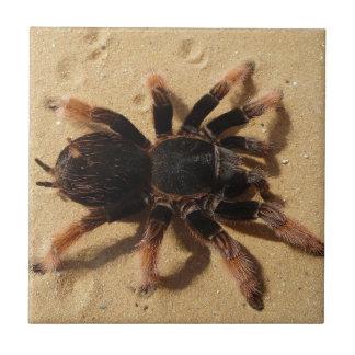 Brachypelma tarantula spider in sand tile