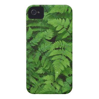 Bracken fern with rain drops, Washington State iPhone 4 Case-Mate Cases