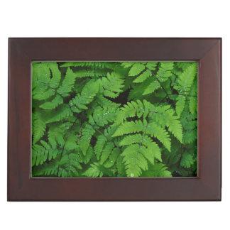 Bracken fern with rain drops, Washington State Keepsake Box