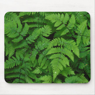 Bracken fern with rain drops, Washington State Mouse Mat