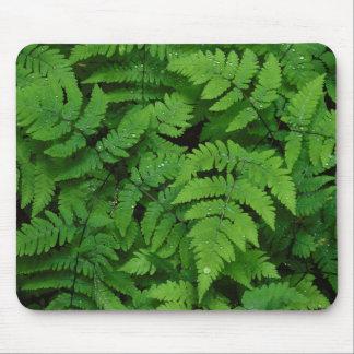 Bracken fern with rain drops, Washington State Mouse Pad
