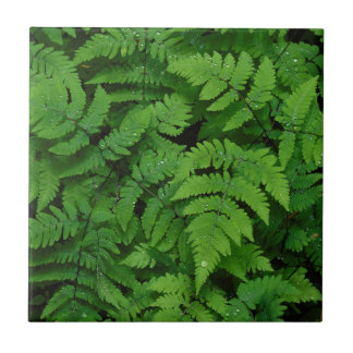 Bracken fern with rain drops, Washington State Tile