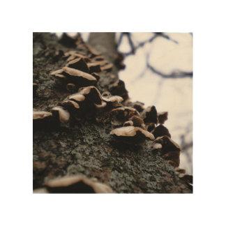 Bracket Fungus Wood Wall Art