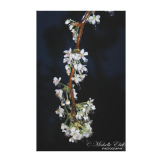 Bradford Pear in Ice Storm Canvas Print