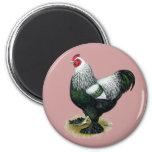 Brahma:  Dark Rooster Magnet