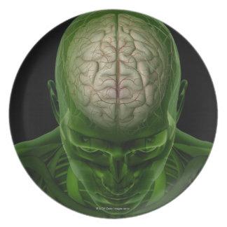 Brain Arteries Plate