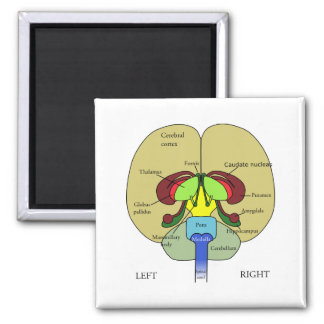 Brain - Labeled Square Magnet