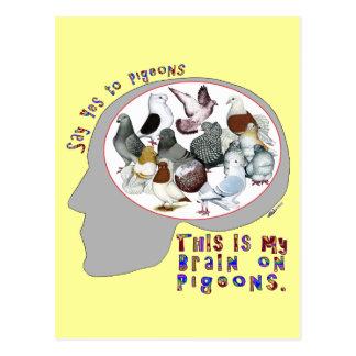 Brain On Pigeons Postcard