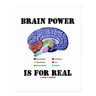 Brain Power Is For Real (Brain Anatomy Attitude) Postcard