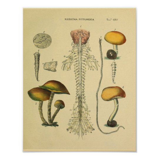 Brain Spinal Nerves Anatomy Mushrooms Art Print
