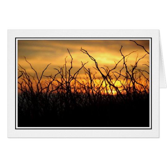 Brambles at Sunset Card
