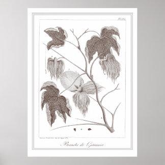 Branch of Cotton Plant - Branche de Cotonnier Poster