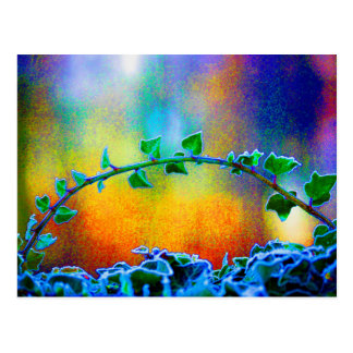 Branch of ivy with hoarfrost coloured digitally postcard