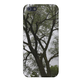 Branch out! Tree landscape. Cases For iPhone 5
