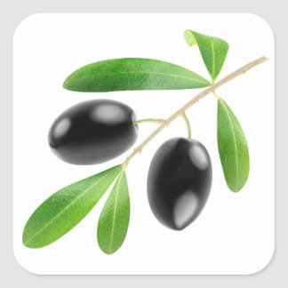 Branch with black olives square sticker