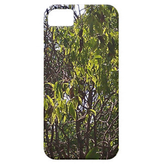 Branches and leaves of a lush green tree iPhone 5/5S cases