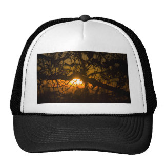Branches And Twigs Hats