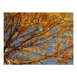 Branches of Maple Leaves II Orange Autumn Poster