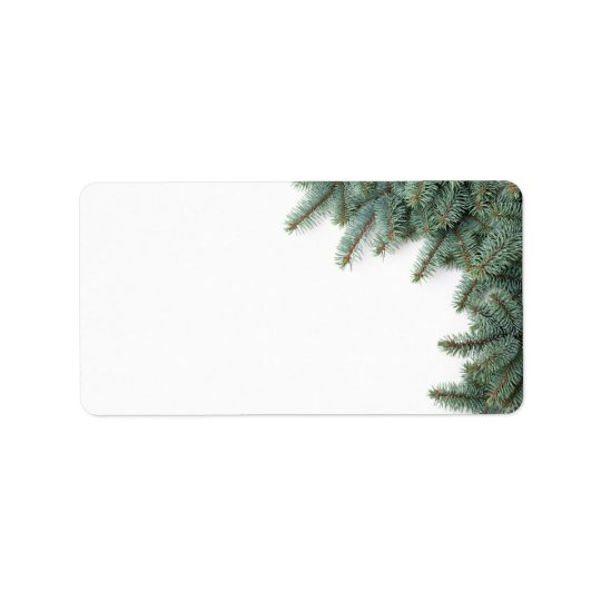 Branches Of Silver Spruce On White Background Label