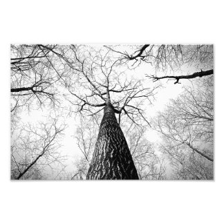 branches photo print