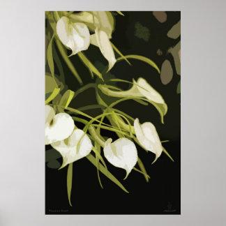 Brassavola Orchid Art Poster