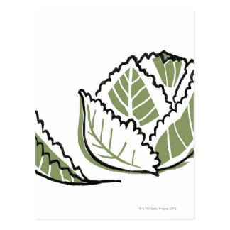 Brassica Oleracea Postcard