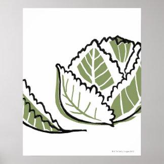 Brassica Oleracea Posters