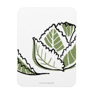 Brassica Oleracea Rectangular Photo Magnet