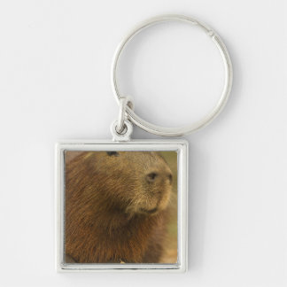 Brazil, Pantanal, Matto Grosso. Capybara Key Ring