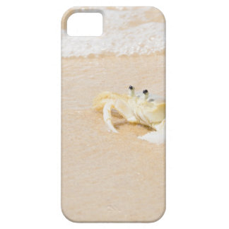 Brazil, Rio de Janeiro, Buzios, Crab on Case For The iPhone 5
