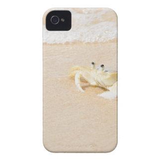 Brazil, Rio de Janeiro, Buzios, Crab on Case-Mate iPhone 4 Cases
