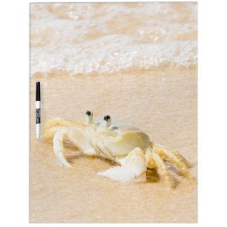 Brazil, Rio de Janeiro, Buzios, Crab on Dry Erase Board