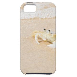Brazil, Rio de Janeiro, Buzios, Crab on iPhone 5 Case