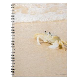 Brazil, Rio de Janeiro, Buzios, Crab on Notebook