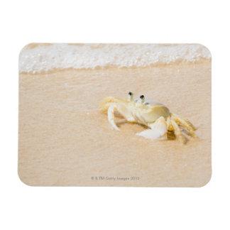 Brazil, Rio de Janeiro, Buzios, Crab on Rectangular Photo Magnet