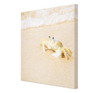 Brazil, Rio de Janeiro, Buzios, Crab on Stretched Canvas Prints