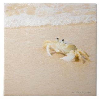 Brazil, Rio de Janeiro, Buzios, Crab on Tile
