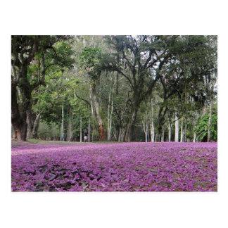 Brazilian flower tapestry postcard. postcard