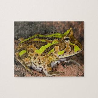 Brazilian Horn Frog, Ceratophrys cornuta, Native Jigsaw Puzzle