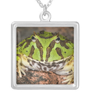 Brazilian Horn Frog, Ceratophrys cornuta, Silver Plated Necklace