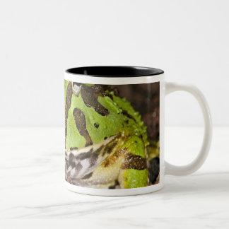 Brazilian Horn Frog, Ceratophrys cornuta, Two-Tone Coffee Mug