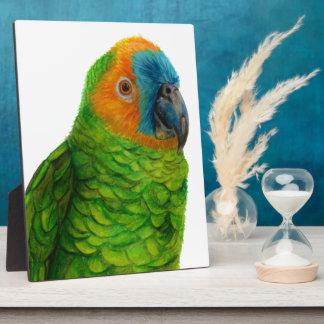 Brazilian Parrot Plaque