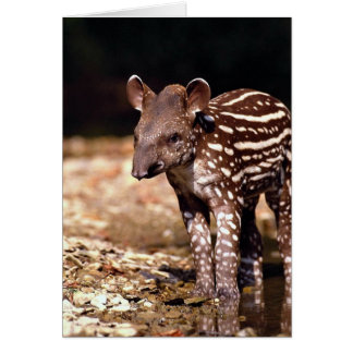 Brazilian Tapir, young calf beside river Card