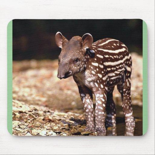 Brazilian Tapir, young calf beside river Mousepads